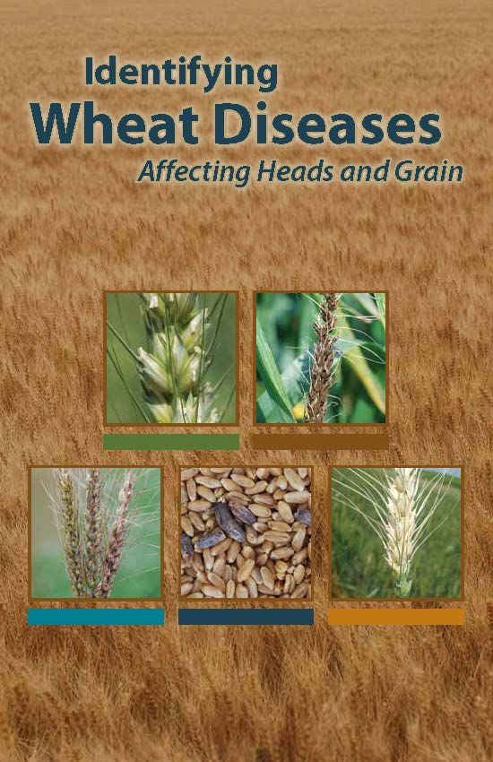 Identifying Wheat Diseases Affecting Heads and Grain