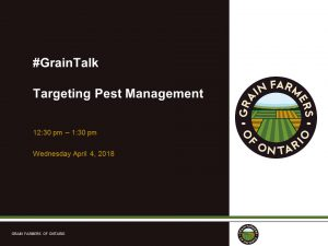 #graintalk targeting pest management